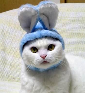 猫界で静かなブーム!?一瞬でウサギになれちゃう帽子!