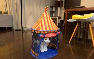 猫さんが気に入ってくれることを期待!猫用テント「夜の遊園地」