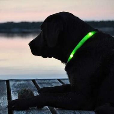 ワンちゃんとの夜の散歩もこれで安心、LED首輪