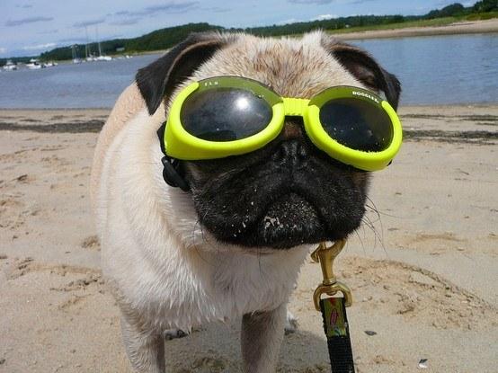 ワンちゃんの目を守ってくれるクールな犬用ゴーグル