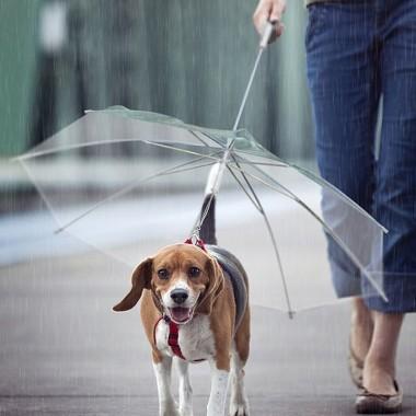 雨の日の便利アイテムベストわんっ?!な犬用傘